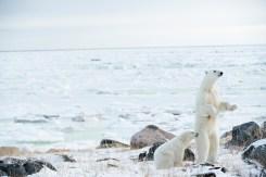 polarbearmomandcubsealriveranjalisingh