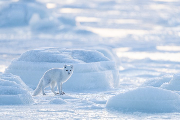 Dressed in white at Seal River. Photo courtesy of ArcticWild.net.