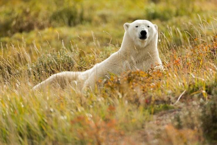 Summer Zen at Nanuuk Polar Bear Lodge. Robert Postma photo.