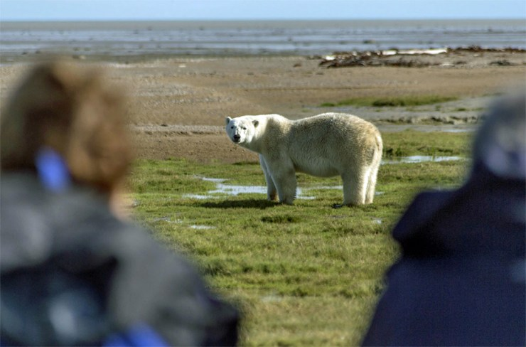 Walking with (and photographing) polar bears at Nanuk. Robert Postma photo.