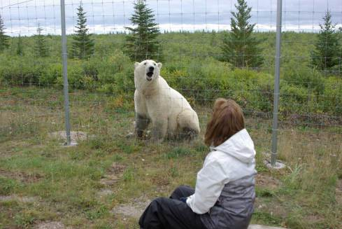 Guest talking to polar bear at compound fence. Nanuk Polar Bear Lodge. Christa Niederreither photo.