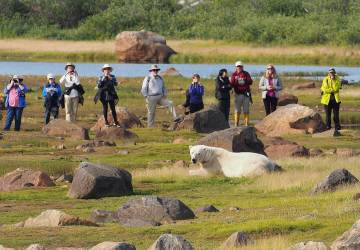 Guests observing polar bear during summer at Seal River Heritage Lodge. Quent Plett photo.