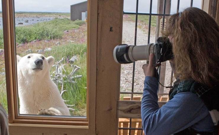 Linda photographing a bear at the door. Seal River Heritage Lodge.