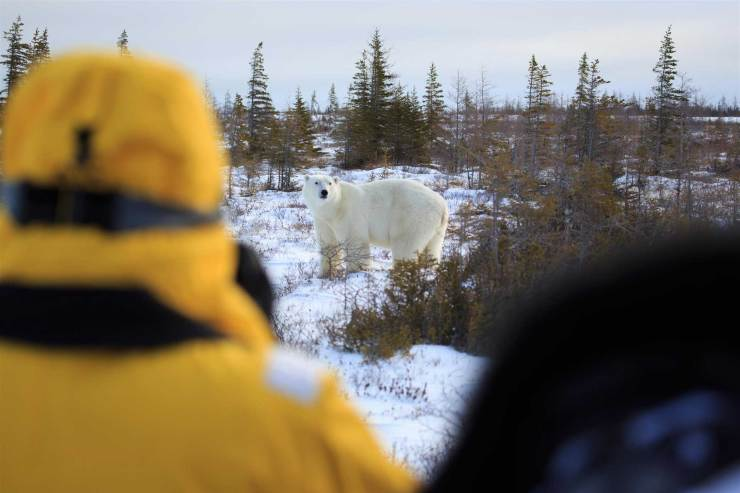 Ethical wildlife viewing at Churchill Wild. Beatrice Jorns photo. Great Ice Bear Adventure. Dymond Lake Ecolodge.