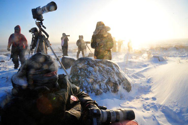 Photographers brave the elements to capture polar bears