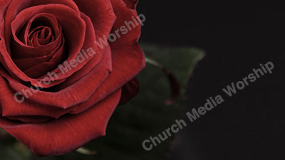 A Rose by any other Name Christian Worship Background. High quality worship images for use to spread the Gospel and enhance the worship experience.