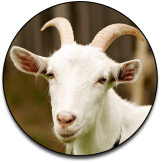 Christian-Goat