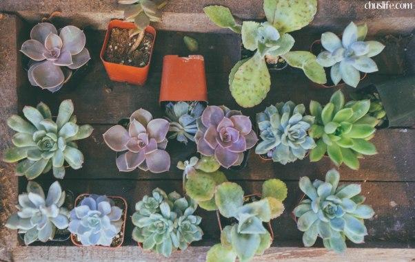 Cute plants!