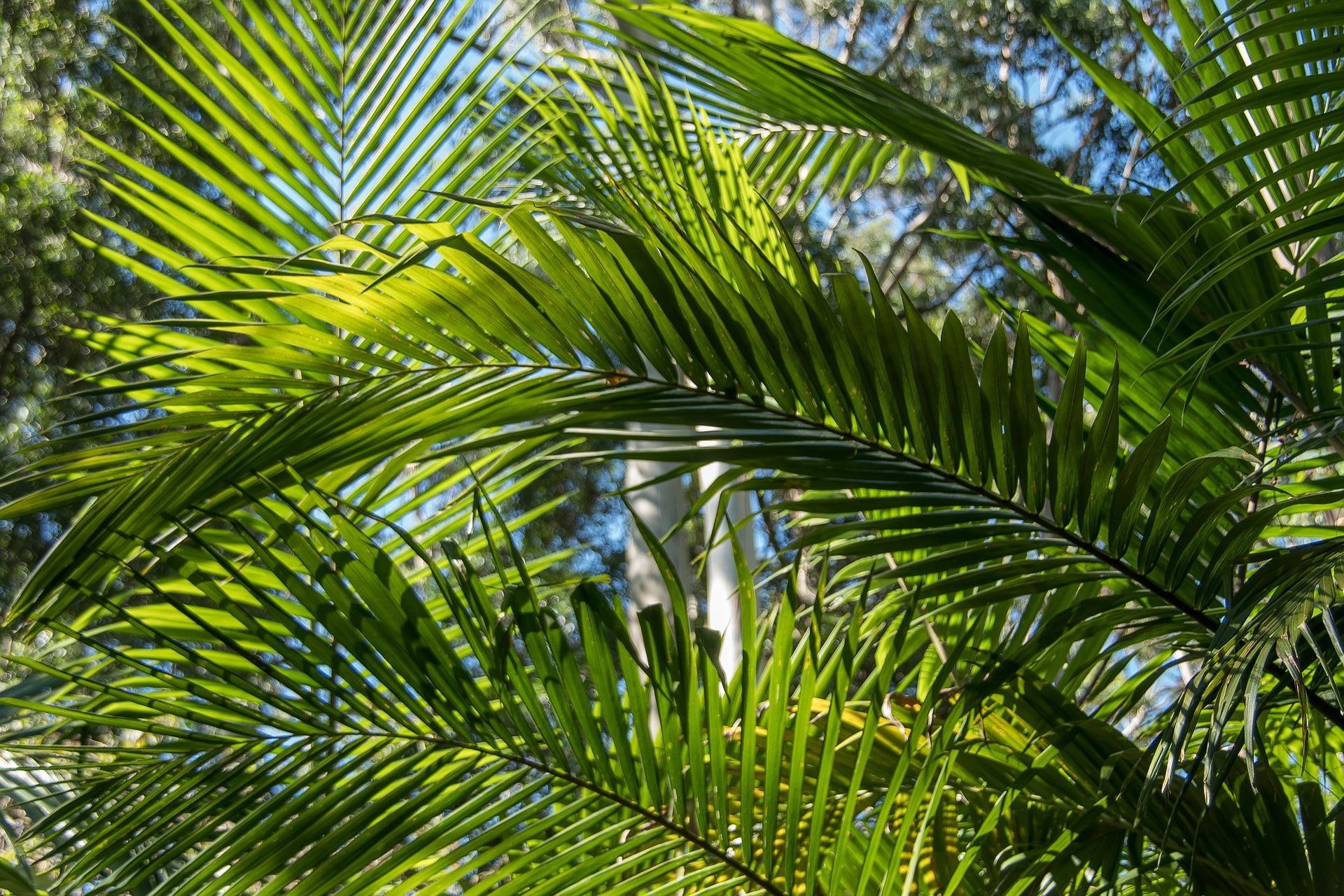 Palmový olej je nebezpečnejší ako si myslíte