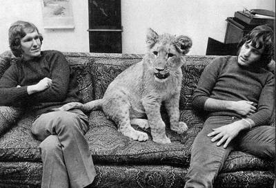 christian-the-lion-with-friends
