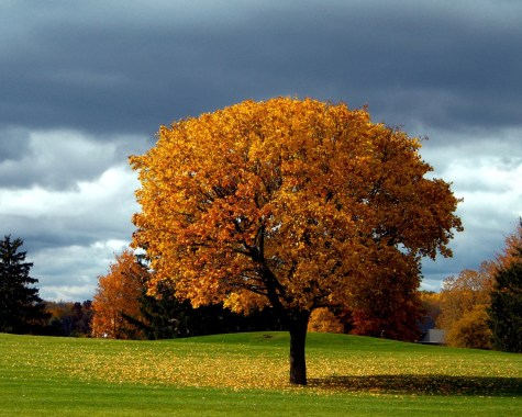 Autumn-Tree-Background-1280x1024