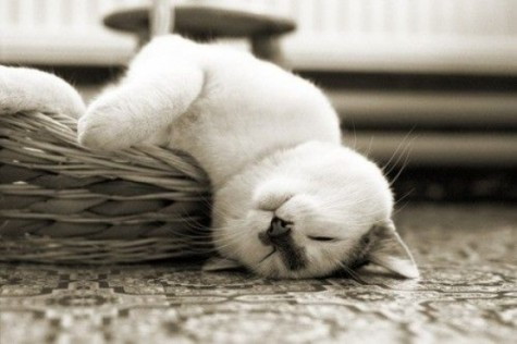 l-Exhausted-cat-is-exhausted