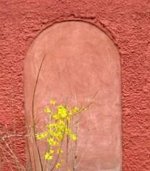 hoa vàng trên tường đỏ