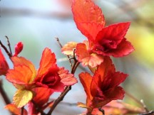lá hay hoa