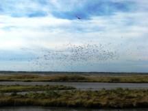 Đàn chim cất cánh