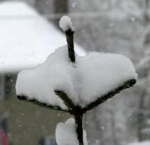 hứng tuyết