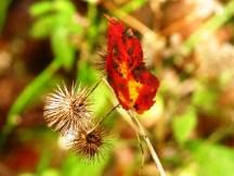 lá rơi giữa hạt khô