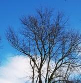 mây xanh mây xanh chiều nay mây trắng
