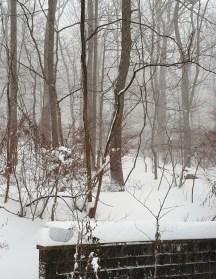 rừng sau nhà 2