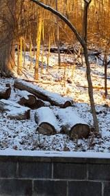 rừng sau nhà khi nắng mới lên