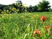 painbrushes và hoa dại