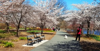 khung cảnh mùa xuân