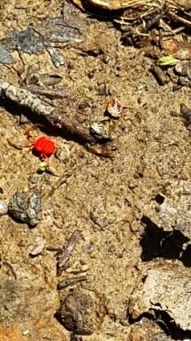 bọ đỏ chạy đến chỗ trốn
