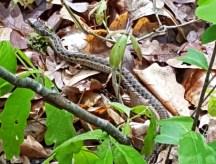 đi gặp rắn ba lần