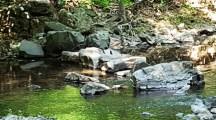 Những tảng đá nằm ngang con suối trông giống như cây cầu