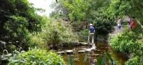 đường đá trong hồ ở vườn Nhật Bản Austin