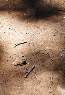 Cái mà ông cụ chỉ xuống đất và nhất quyết tôi phải đến xem là con nhái này đây. Màu nó lẫn vào màu đất trên đường. Bỗng dưng mà có con rắn và con nhái nằm ngay giữa đường.