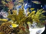 cá râu rồng