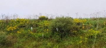 ảnh chụp từ trong xe đồng cỏ hoa dại