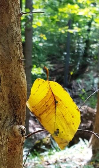 Trong rừng một chiếc lá vàng treo lửng lơ