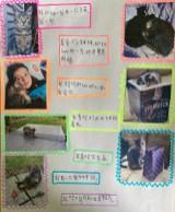 Clevedon School - Year 7- Lexi - Jasper the cat
