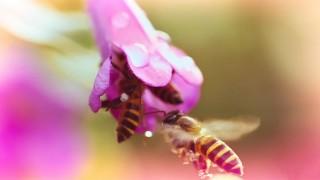 Male flower gets pistil pumped by dirty voyeur