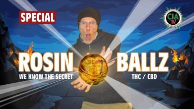 Photo of Das Geheimnis der Rosin Balls – So siehts aus, so wird es gemacht