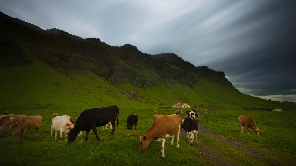 Iceland farm, Ring Road