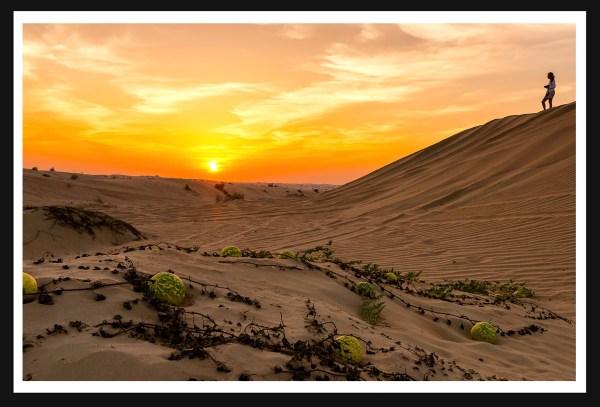 Dubai Arabian Desert