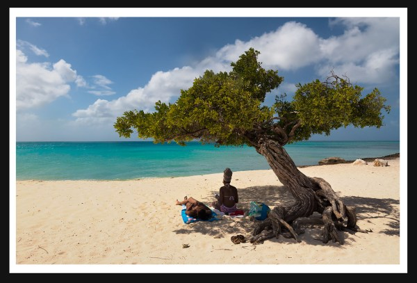 Divi Tree, Eagle Beach, Aruba