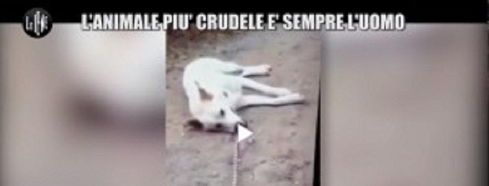 cane-ucciso-sangineto-ev le iene