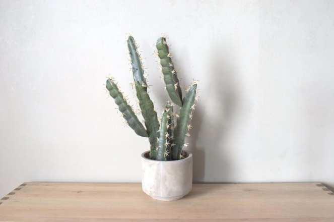 Cactus en maceta sin agujero