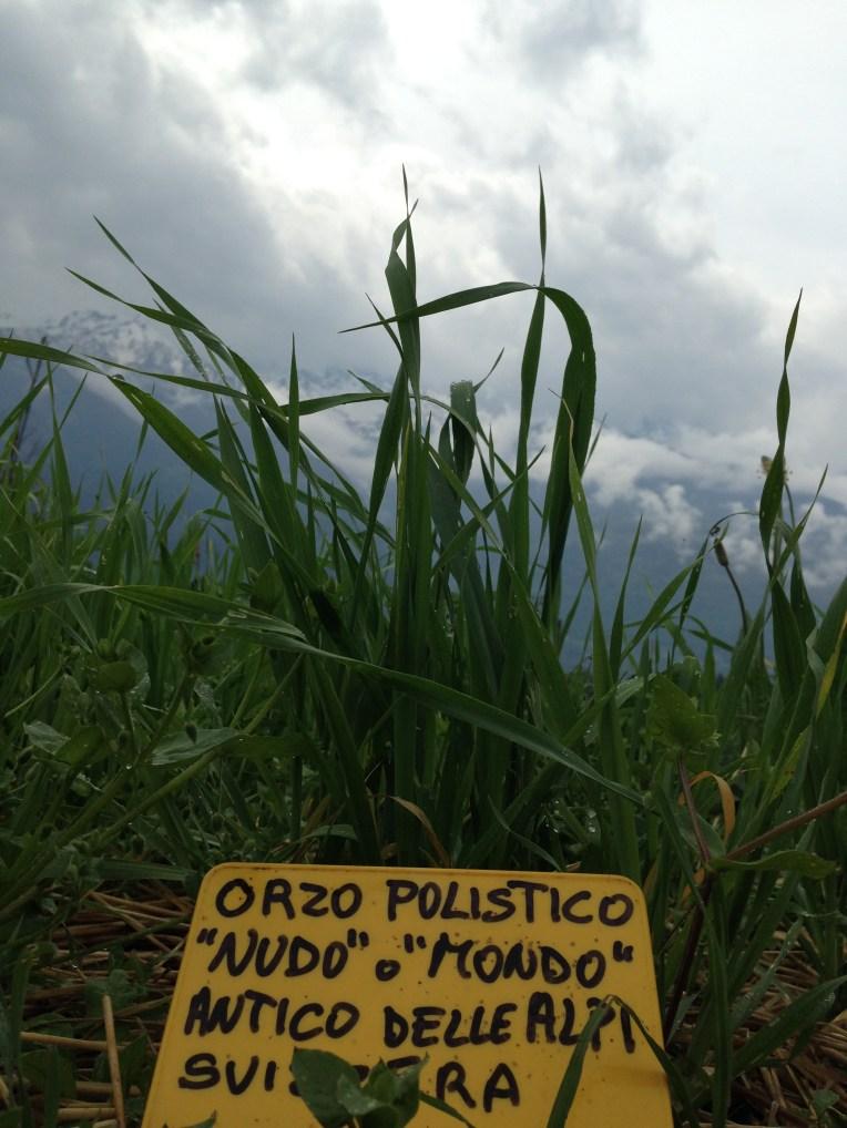 Raetia Cereali - Orzo Polisitico