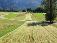 Grano Saraceno - Campi e Strade