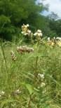 Saraceno al Parco delle Cave - Il Fiore e i Semi