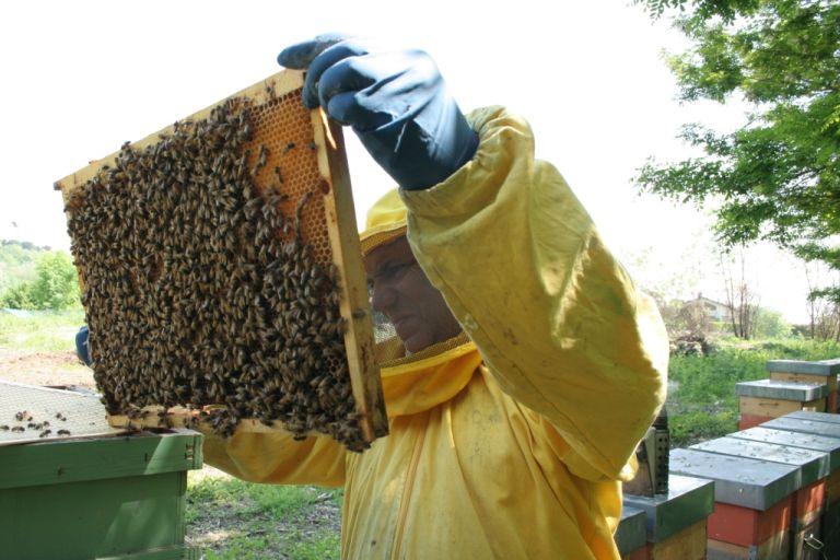 apiario brianza 012b