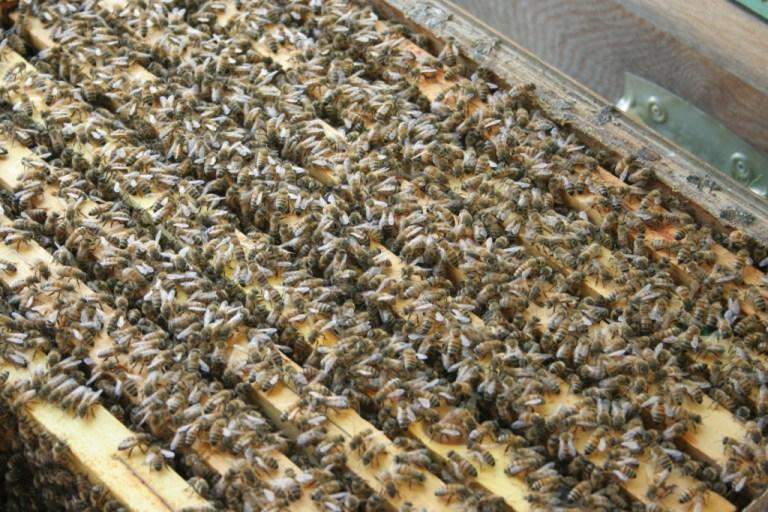 apiario brianza 026b