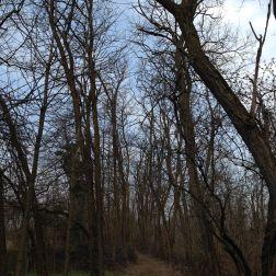 La strada nel bosco a la Mia Terra