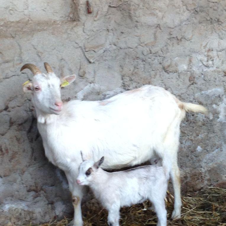 Madre e Figlia a Cascina Caldera