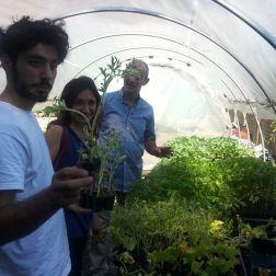 Anguriera Chiaravalle - La serra a Cascina Mischia